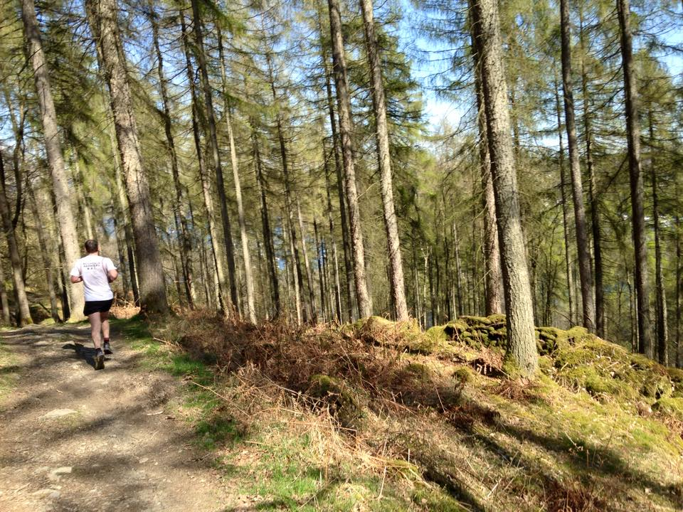 lakelandtrails-hawkshead-heald-wood-1