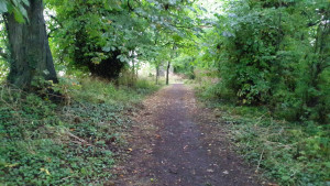 lyrath-trail3