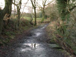 local trail run